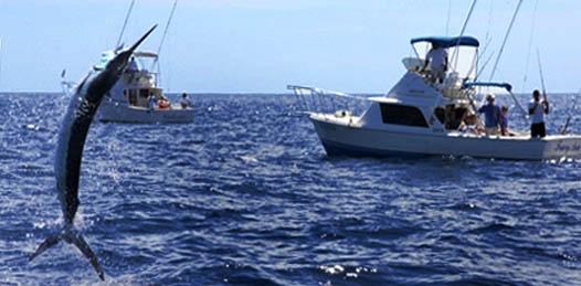 Le tomó una década al Comisionado de Pesca saber que la inspección y vigilancia no funcionan