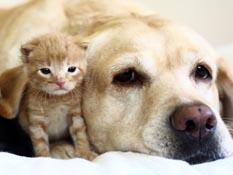 Ofrecen seguro de gastos médicos para mascotas