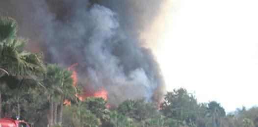 73 hectáreas fueron consumidas por 8 incendios forestales durante el verano
