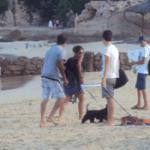 Playa Palmilla, donde aún la gente lleve a sus perros