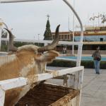 ganaderos en palacio