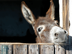 Tenencia a burros y caballos