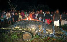 cocodrilo filipino
