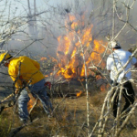 Incendio en Chametla