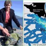 mortandad de tortugas