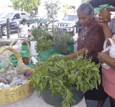 Celebran 36 años del mercado municipal