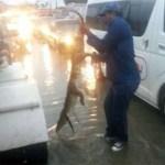 Cocodrilos en las calles de Tamaulipas