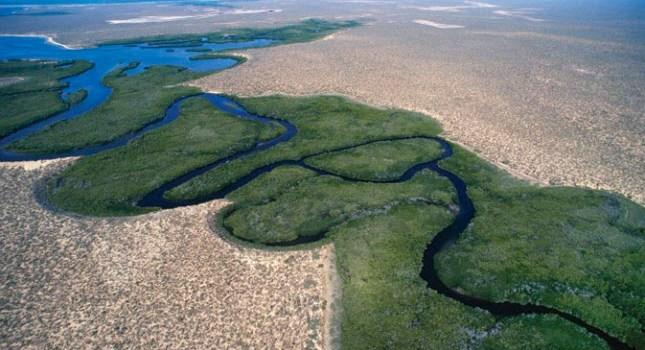 El mangle rojo del Pacífico Norte de México