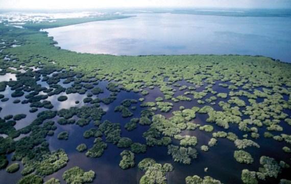 Imagen aérea de  Marismas Nacionales