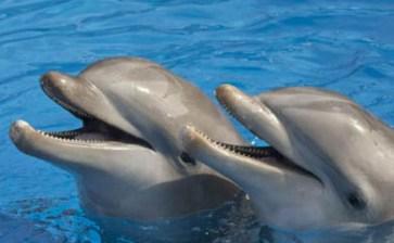¿Delfines que se drogan?