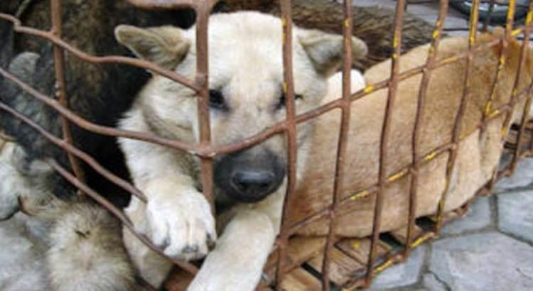 Todavía no se puede castigar a nadie por maltrato animal