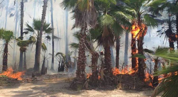 Incendio en Todos Santos