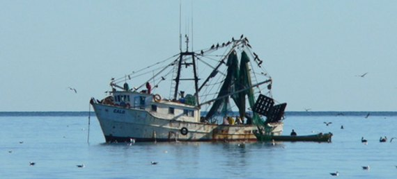 barcos sardineros