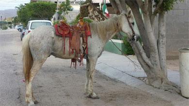 Chocaron una Cherokee y un caballo