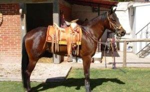 festival del caballo
