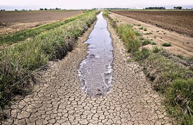 Restringe California consumo de agua