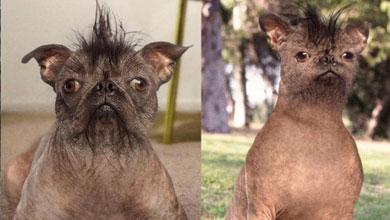 Le hizo una cirugía plástica a su perro