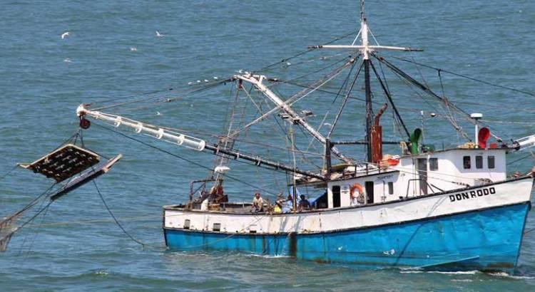 Publica SAGARPA periodos de veda de camarón en el Pacífico