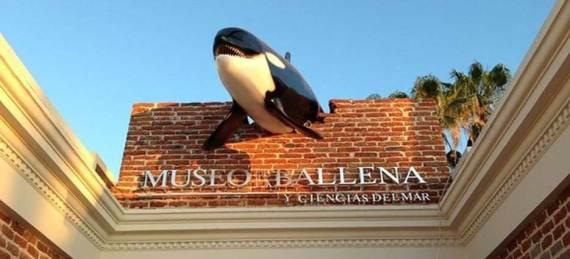 El Museo de la ballena