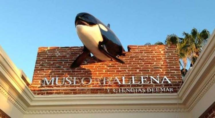 Para Semana Santa abrirá las puertas «El Museo de la ballena»