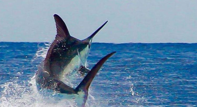 Peligra la pesca deportiva en Los Cabos