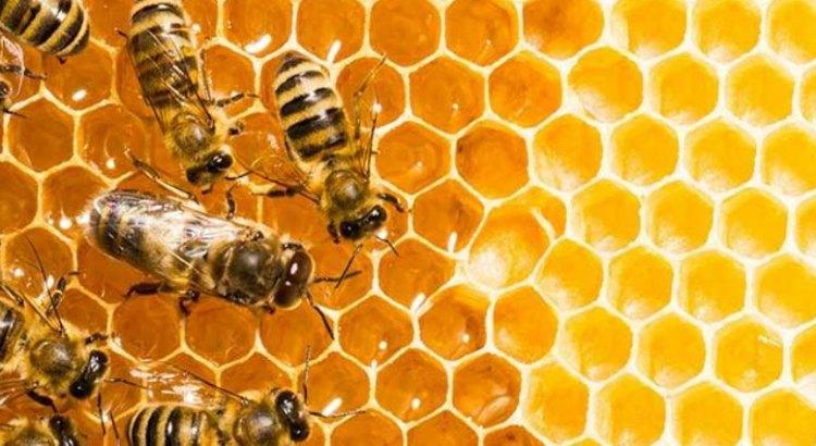 Mortal ataque de abejas