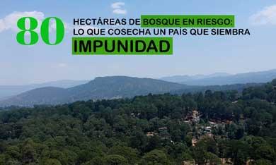 80 hectáreas de bosque en riesgo