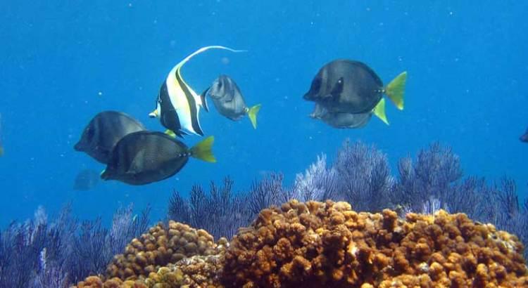 Trabajan en un índice de peces que se están adaptando al cambio climático