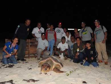 Avanzan trabajos de seguimiento satelital a tortugas caguamas
