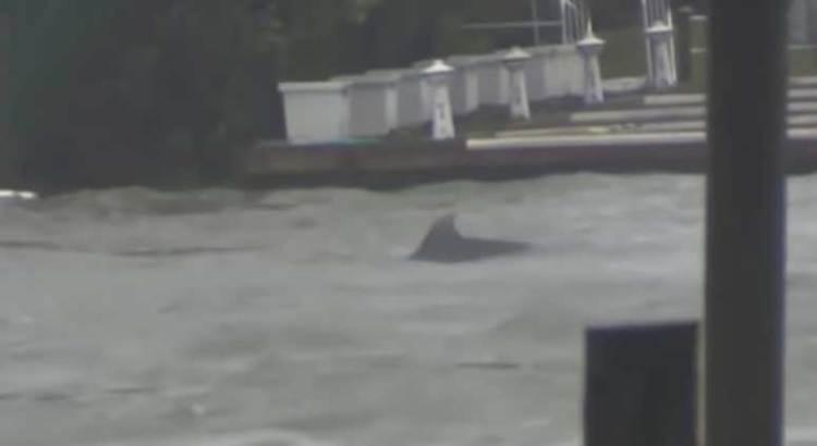 Nadan delfines en las calles