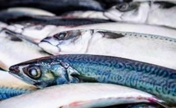 """Ponen """"pupilentes"""" a pescados"""