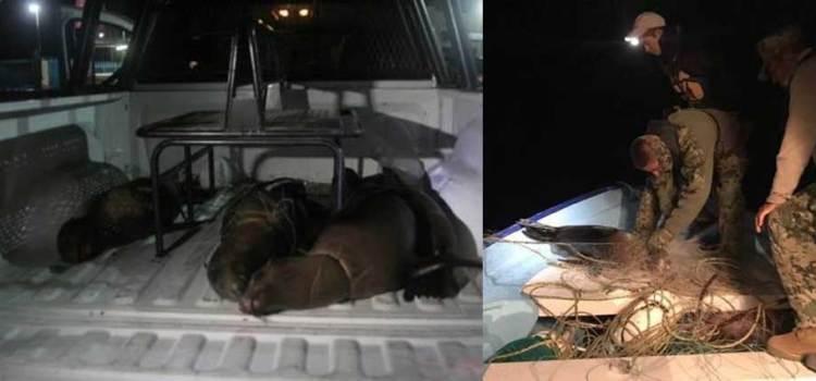 Presenta PROFEPA denuncia penal por muerte de 4 lobos marinos