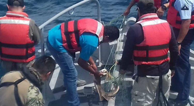 Preserva SEMAR flora y fauna marina de BCS
