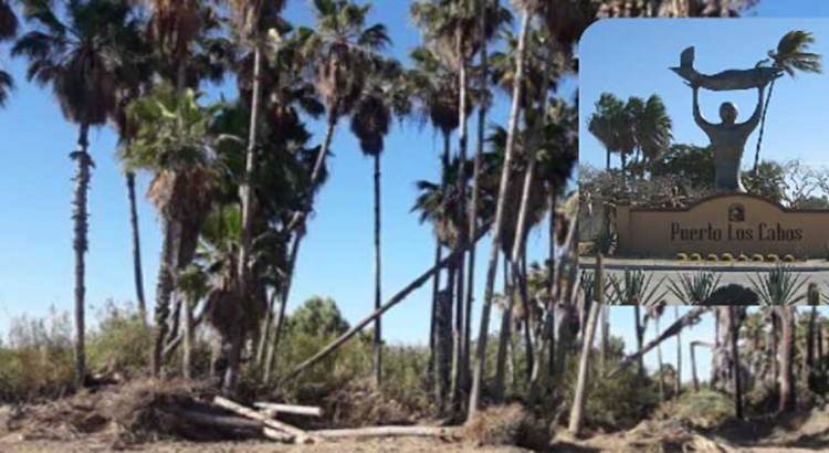 El ayuntamiento cabeño, cómplice del ecocidio en el Estero de San José