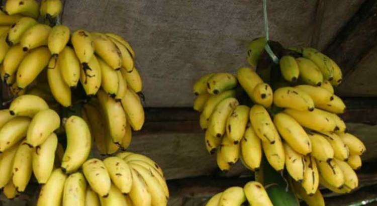 Firman México y China acuerdo para exportar plátano