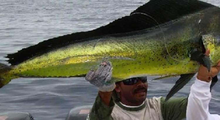 Inminente liberación de la pesca de Dorado
