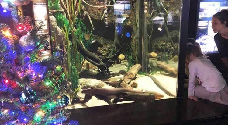 Usan una anguila eléctrica para encender el arbolito