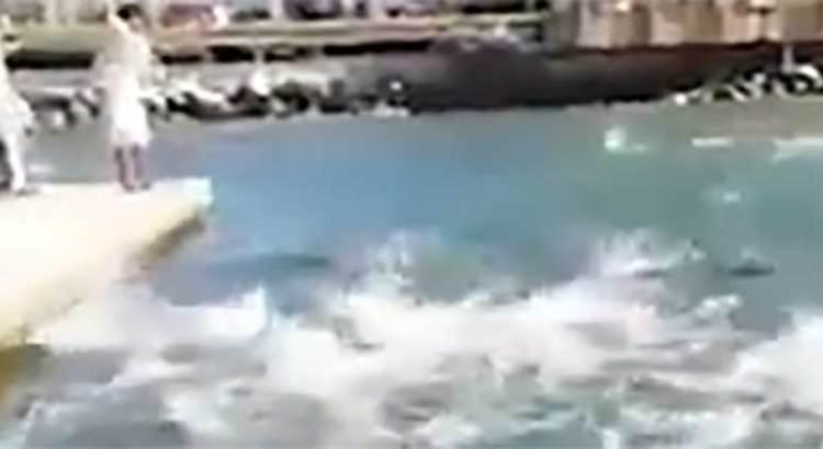 Gran espectáculo natural en la marina de CSL