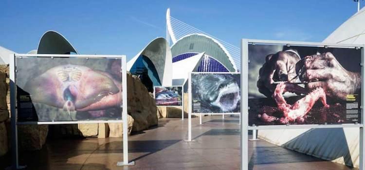 Expone Biólogo de BCS en el Oceanogràfic de Valencia