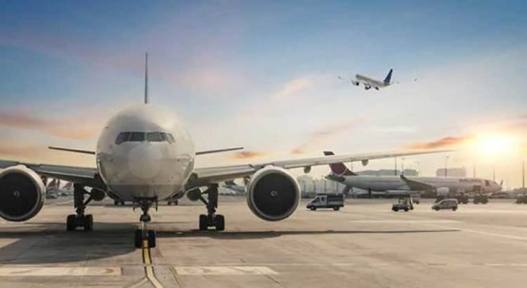 Atropella avión a un oso