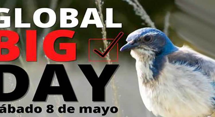 Vive el Global Big Day