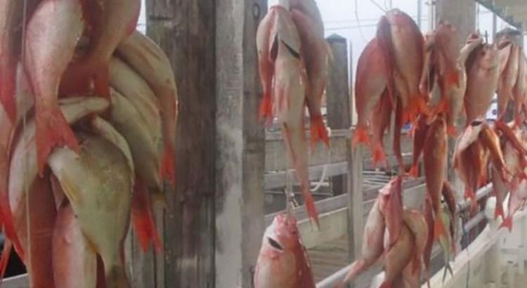 Otorga EU certificación negativa a la pesca mexicana