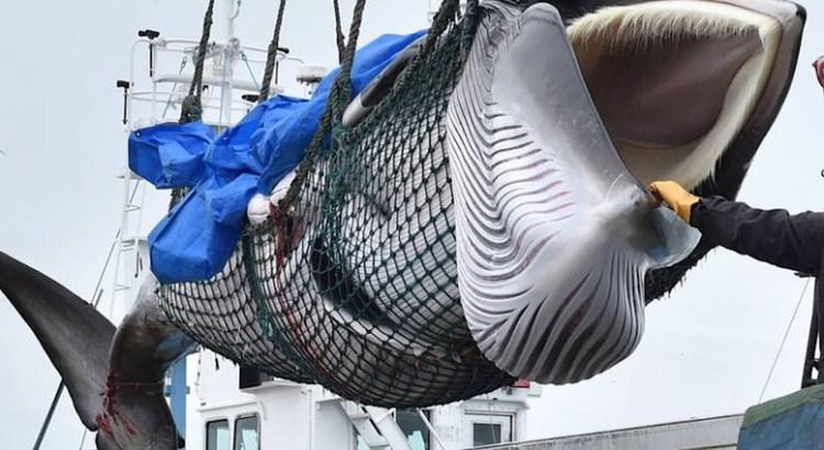 Narcisito Agúndez, como Covarrubias, contra las ballenas
