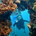 Diving di Karimun Jawa