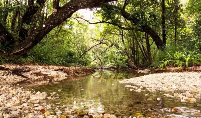 Hutan hujan tropis di Taman Nasional Ujung Kulon