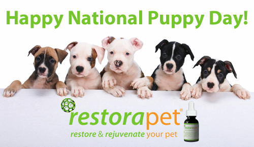 national puppy day ad