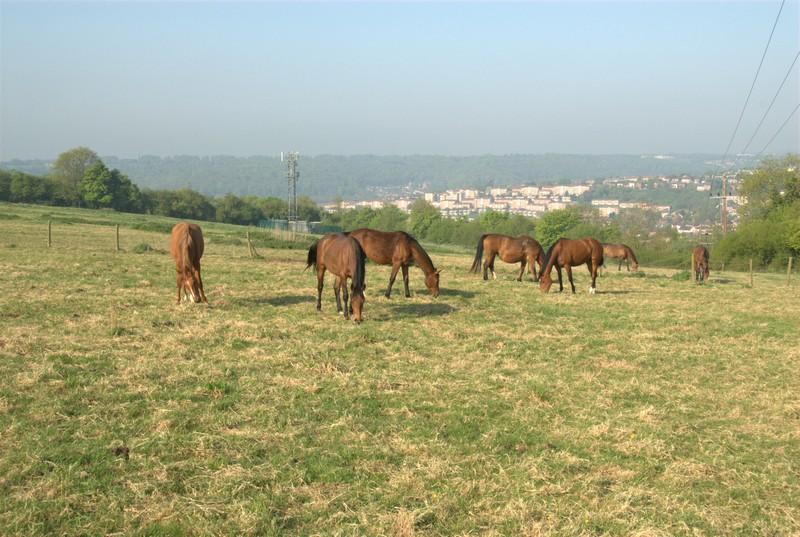 ashwells-horses