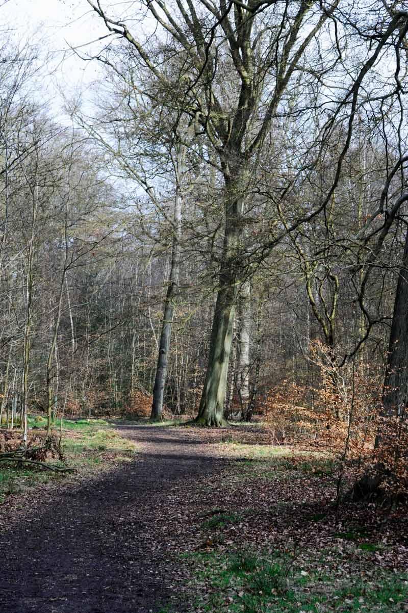 common-wood-12