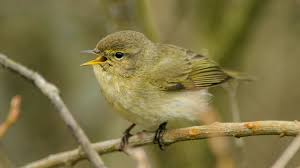 Springwatch with a difference, but Bill spotted 37 species !