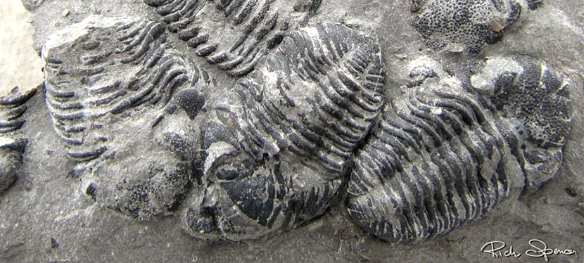 Our Fossils